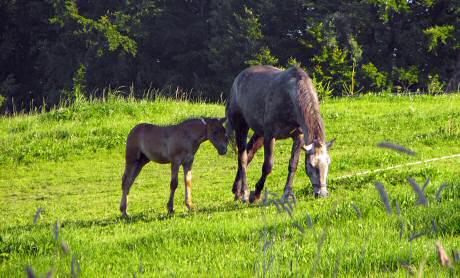 kmetija konj